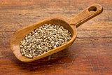 scoop of hemp seeds