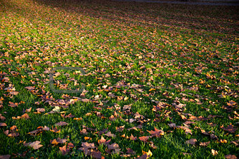 autumnal covered grassland
