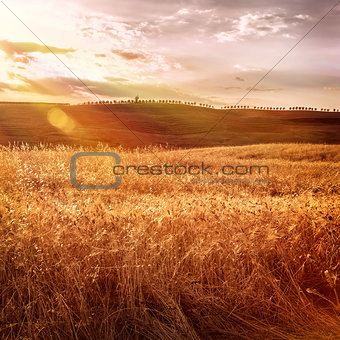 Beautiful autumn wheat field