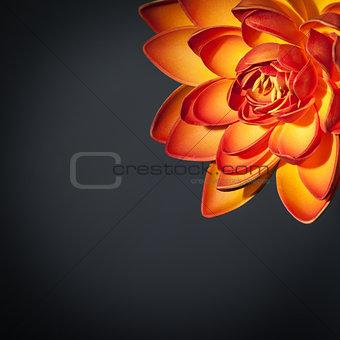 Beautiful orange lotus flower