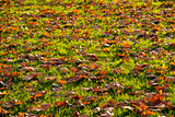 leaves on grassland