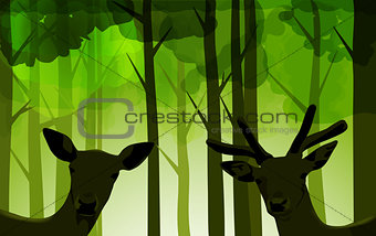 forest deers
