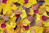 Random autumn leaves