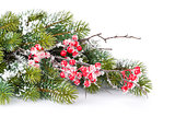 Christmas decorative snow branch with holly berry