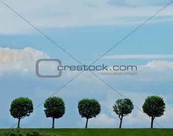 Circle Shaped Trees