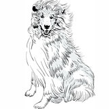 Vector sketch dog Rough ñollie breed hand drawing vector
