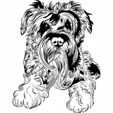 Vector sketch dog Schnauzer breed hand drawing vector