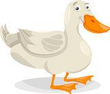 duck farm bird cartoon illustration