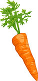 carrot root vegetable cartoon illustration