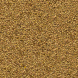 Brown Lentils Background. Seamless Texture.