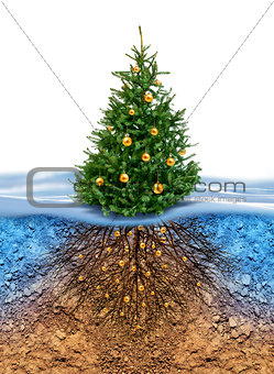 Green Christmas tree with roots beneath