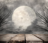 Forest with full moon