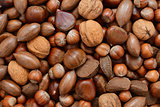 Mixed nuts - chestnuts, pecans, walnuts, brazils and hazelnuts