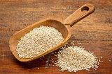 scoop of white quinoa