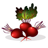 Beet vector illustration.