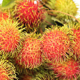 Rrambutan ,Tropical Fruit