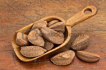 Brazilian nuts in rustic scoop