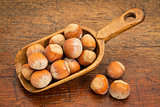 hazelnuts in rustic scoop