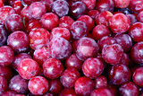 Fresh organic plum fruit background, photo taken at local farmer