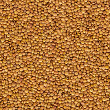 Lentil Yellow Evenly Layer Background.