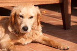 Dog on fall sun lit porch floor