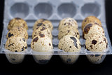 Quail eggs on egg box, side view, focus on front, black background