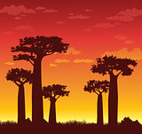 Baobabs and sunset. Madagascar.