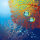 Underwater life - fish and coral.