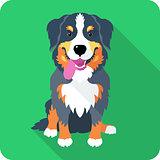 bernese Mountain Dog dog icon flat design