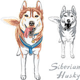 vector dog Siberian Husky breed