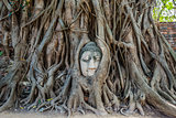 Buddha Head banyan tree Wat Mahathat Ayutthaya bangkok Thailand