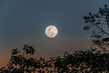 full moon in the peruvian Amazon jungle at Madre de Dios Peru