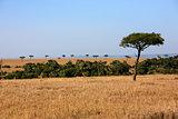 plains Masai Mara reserve Kenya Africa