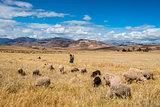 woman shepherd peruvian Andes  Cuzco Peru