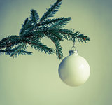 Christmas tree branch isolated