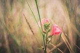 Pink flower vintage