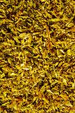 closeup of rosemary herb in sunlight
