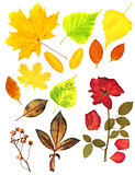 Autumn leafs and dry rose
