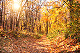 Sun in autumn forest
