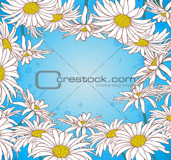 Chamomile on a blue background