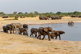 several heard of African elephants at waterhole