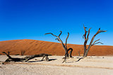 beautiful landscape of Hidden Vlei in Namib desert