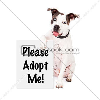 American Staffordshire Terrier Rescue Me