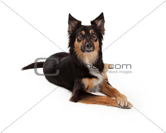 Attentive Mixed Breed Dog Laying