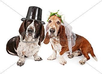 Basset Hound Bride and Groom
