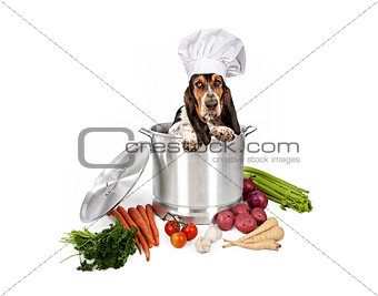 Basset Hound Dog in Big Cooking Pot