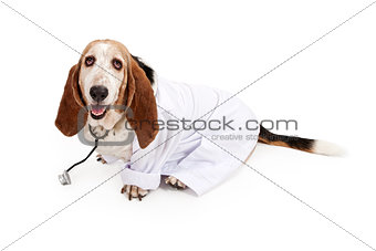 Basset Hound Dressed as a Veterinarian