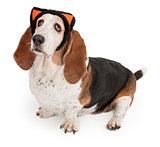 Basset Hound Dog Wearing Cat Ears