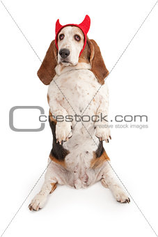 Basset Hound Dog wearing devil horns