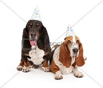 Basset Hound Dogs Wearing Birthday Hats